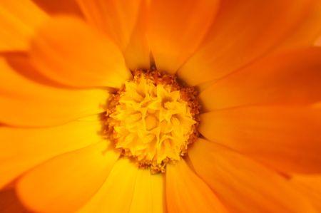 Macro orange flower Stock Photo - 7967613