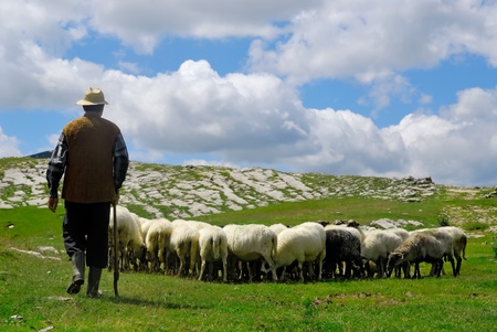 Shepherd with his sheep on pasture photo