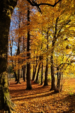 tree vertical: Forest in autumn