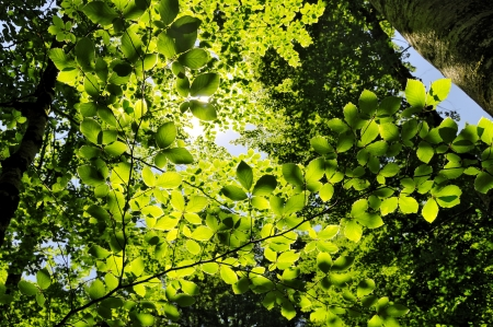 Sun shining into forest, low angle view