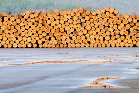 sawed: Freshly cut tree logs piled up