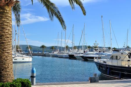 Marina with yachts and palms photo