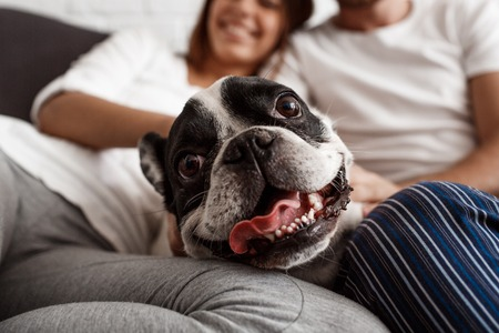 Young beautiful couple resting on sofa with dog. Focus on pug. Stock Photo