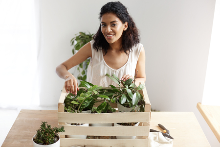 Beautiful african girl smiling looking at camera taking care of plants in box at workplace. Copy space. Stock Photo