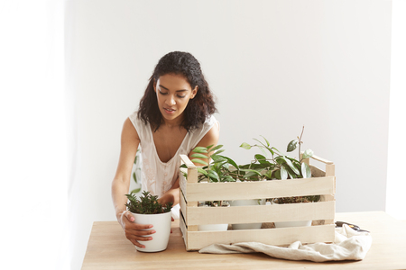 chamomile flower: Beautiful african girl smiling taking care of plants in box at workplace. Copy space.