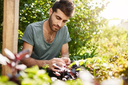Close up portrait of young good-looking caucasian man in blue t shirt concentrated working in his countryside garden in hot summer day. Gardener spending day planting vegetables. Reklamní fotografie