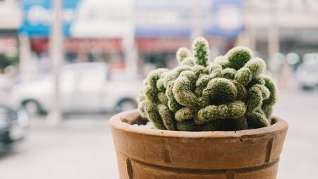green house effect: Cactus pot by window glass. Stock Photo