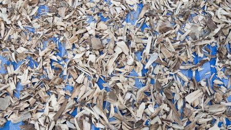 salix alba: Dry barks for making herbs.