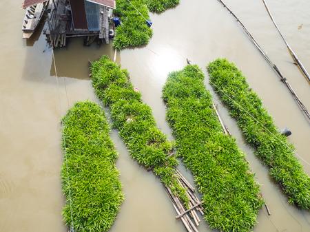 Pandan or Screwpine farm and grow on a river.
