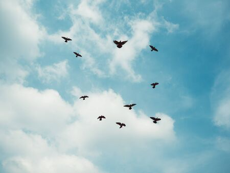 Flock of grey dove fly on vintage blue sky.