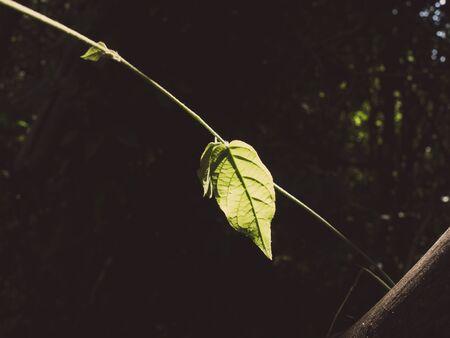 brighten: One green leaf brighten with sunlight in dark corner. Stock Photo