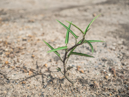 survive: Small plant trying to grow on dry arid dirt ground.