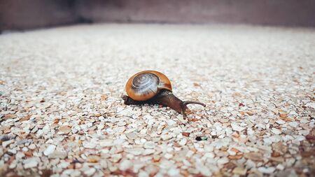 시멘트 자갈 지상에 크롤 링 작은 작은 달팽이의 닫습니다. 스톡 콘텐츠