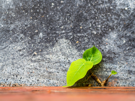 Little sprout fight to grow under rough cement environment. Фото со стока