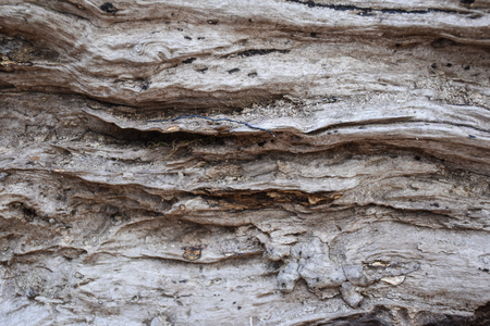particular wood view 版權商用圖片 - 90275788