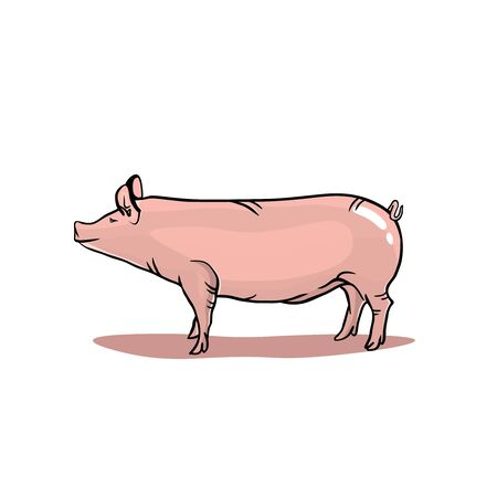 Realistic pig isolated on white background, pink pig illustration in realistic style.