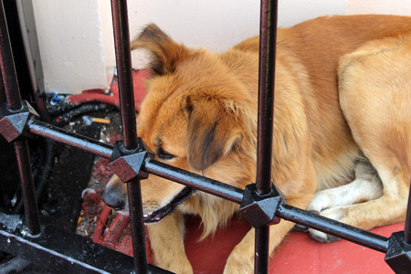 confined: Stray Dogs brown hair outside in Istanbul