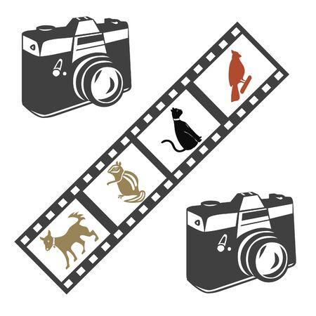 camera film: Camera and film illustration
