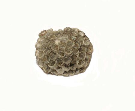 Abandoned wasp nest photo Reklamní fotografie