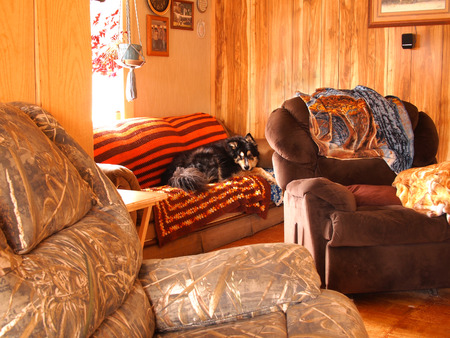 Home interior photo of Bernese and husky mix dog looking intently towards camera
