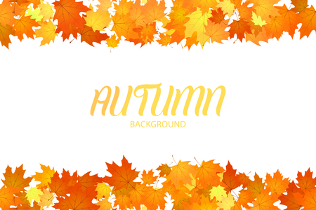 Autumn floral background. Leaves isolated on white background