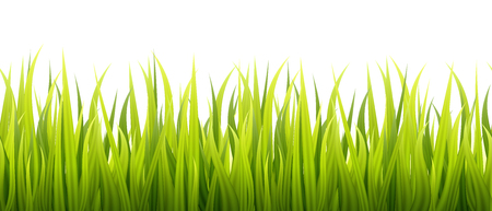 Seamless spring grass lines for edging, footer and decorations. Springtime sprouts grows in a daylight