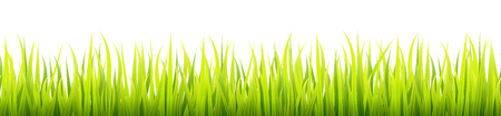 Fresh and green spring grass growth. Springtime lawn lighted with a sunlight during the day time. Seamless herbal height banner