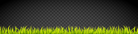 Grass banner. Cereal sprouts. Springtime growth greenery. Green turf overlay stripes