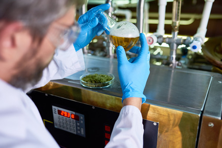Skilled beer engineer examining quality of beer at brewery