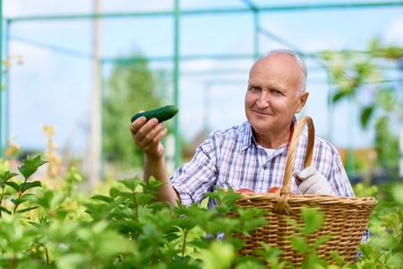 Proud Farmer Presenting Ripe Cucumbers