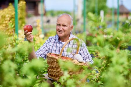 Happy Senior Man Gathering Apples