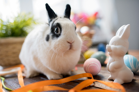 Pet Easter Bunny