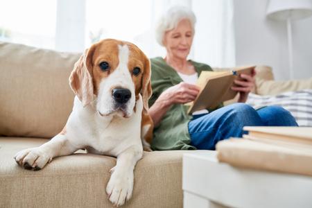 Dog is senior womans best friend