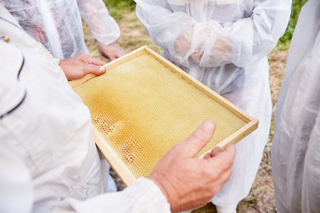 Apiarist Collecting Honey and Wax Stock Photo