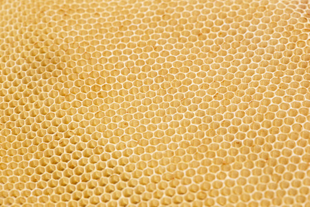Honeycomb Background 写真素材