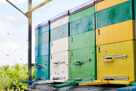 Bright Hive Boxes in Apiary
