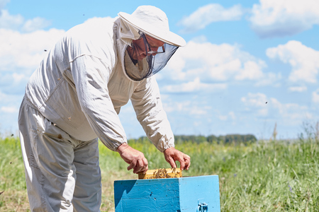 Senior Beekeeper Checking Hive Box Stock Photo - 100055246