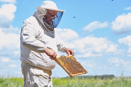 Senior Beekeeper Collecting Honey
