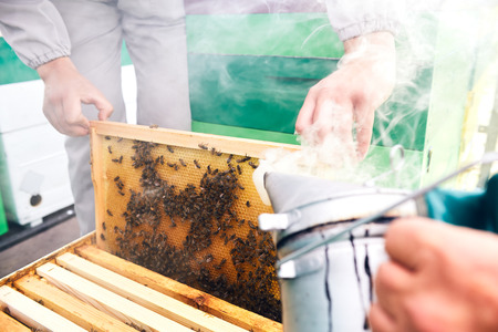 Beekeepers Smoking Hive Stock Photo