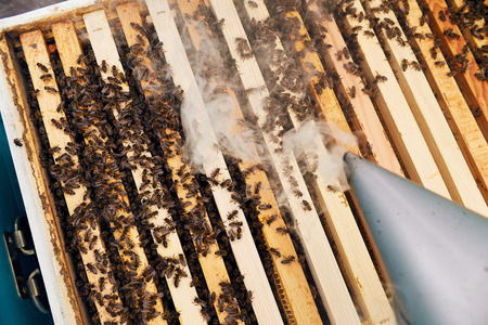 Apiary Smoking Close Up
