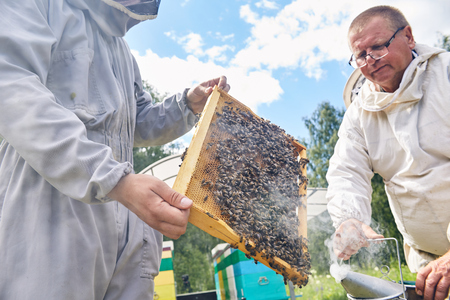 Apiary Workers Smoking Hives