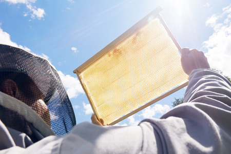 Apiarist Holding Golden Honeycomb Stock Photo - 100055196