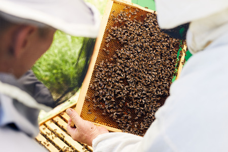 Beekeepers Inspecting Hive