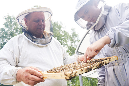 Two Apiary Workers Checking Hives Stock Photo