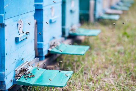 Blue Hive Boxes in Apiary