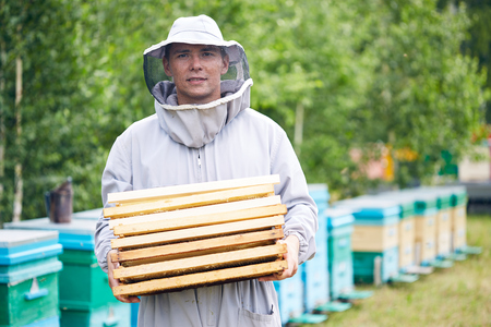 Young Worker in Apiary Stock Photo