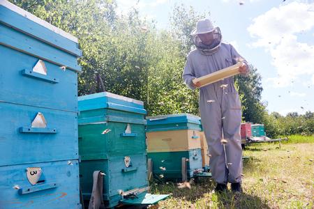 Beekeeper Collecting Honey Stock Photo