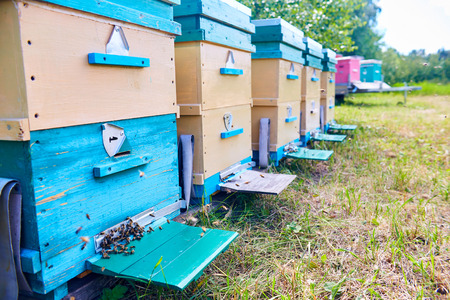 Colorful Hive Boxes in Apiary