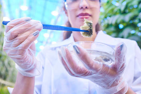 Scientist Taking Probes in Plantation Closeup