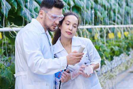 Scientists Checking Quality of Vegetables in Plantation Stock Photo